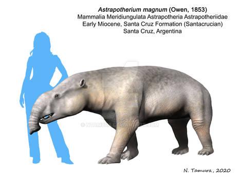 Astrapotherium magnum