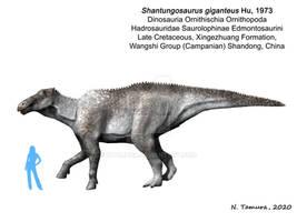 Shantungosaurus giganteus