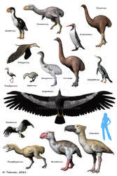 Cenozoic birds