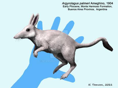 Argyrolagus palmeri