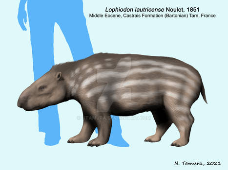 Lophiodon lautricense