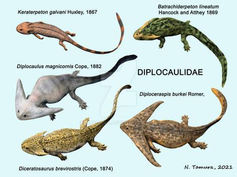 Diplocaulidae