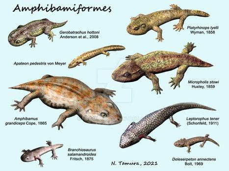 Amphibamiformes