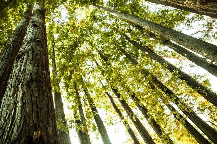 My neck of the woods by ZAvila17