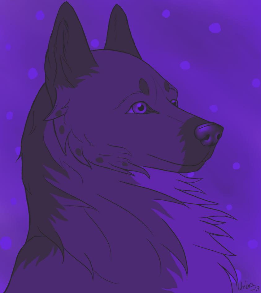 Purple Haze by Zenumbra