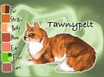 Tawnypelt of ShadowClan - Faded Boundaries