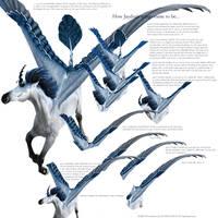 Wings: Jaydan