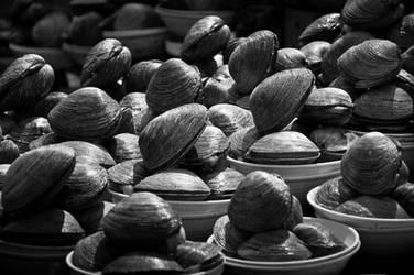 Seashells by 4d0