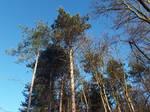 Sunny Treetops