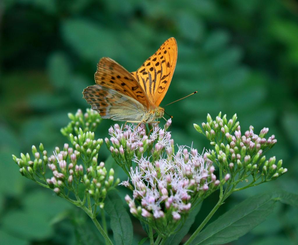 butterfly 6 by mariustipa