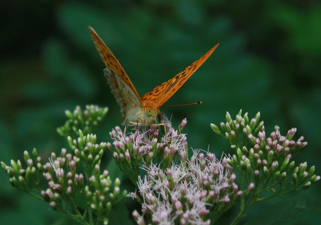 butterfly 7 by mariustipa