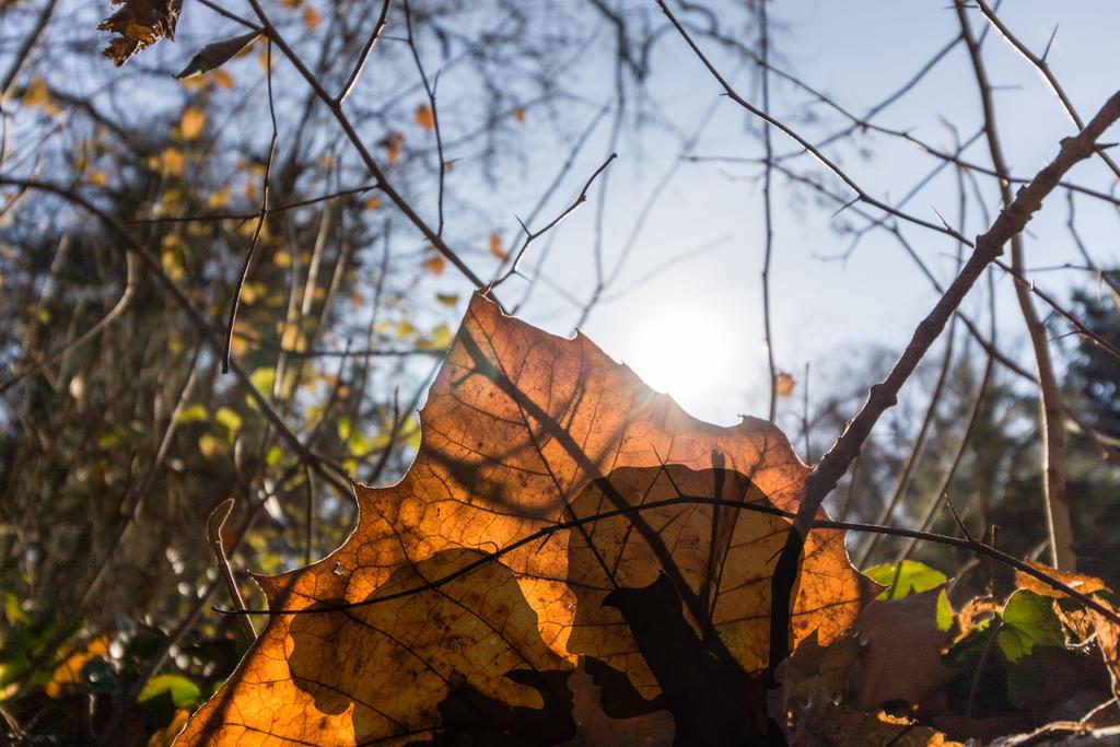 Autumn by mariustipa