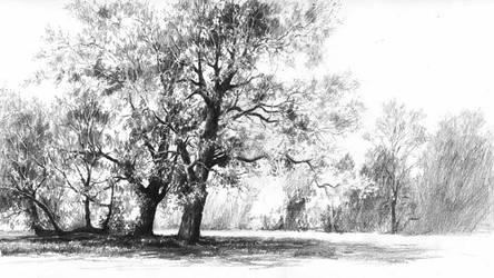 Oak trees by micorl