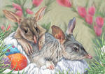Bilby Youngsters - Australian Easter Bunnies by digit-Ds