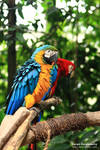 Talking like parrots