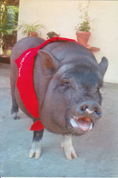 My Piglet Oggy