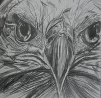 Bold Eagle sketch