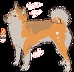 Shiba Inu adoptable 2
