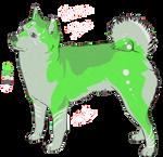 Shiba Inu adoptable 3