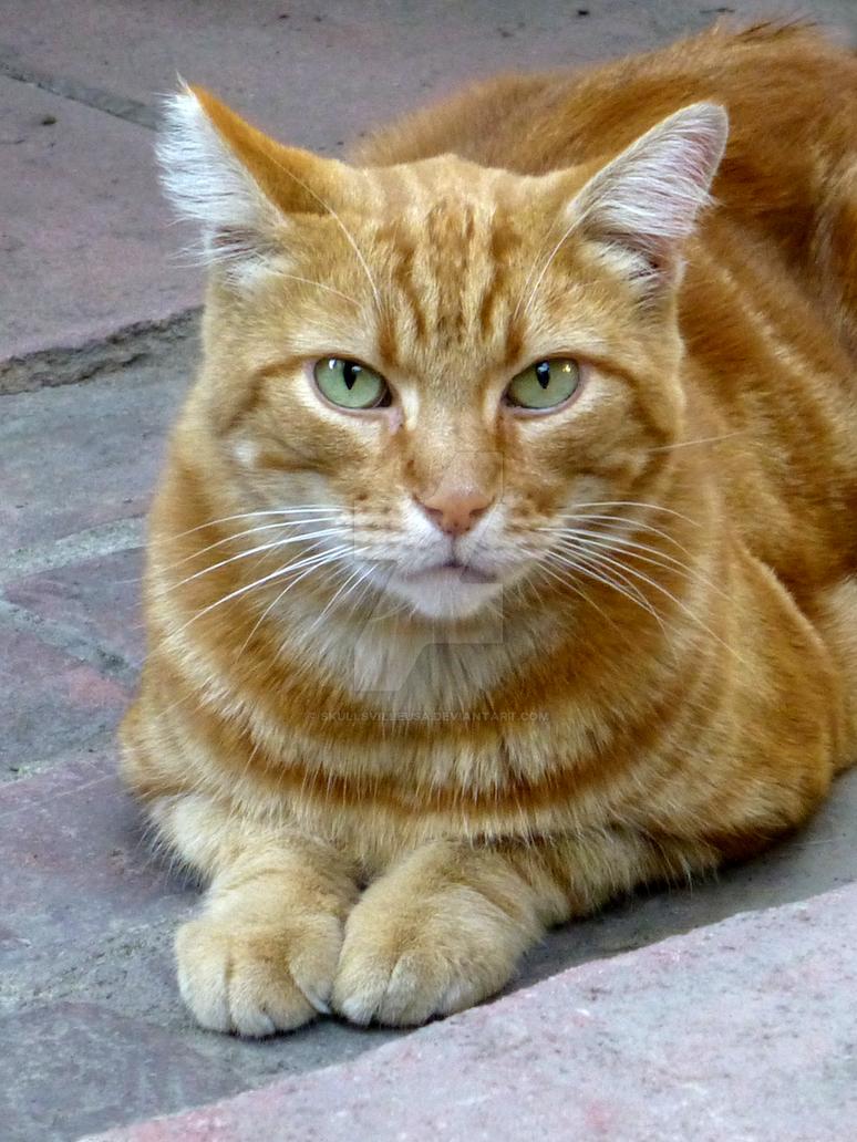 Pixel ~ The Yellow Cat by SkullsvilleUSA