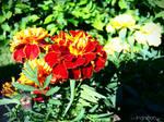 Orange flower - Spring 2011
