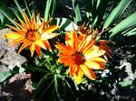 Amazing flower - Spring 2011