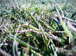Grass - March 2012