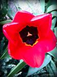 Spring Flower 2012 - 17
