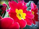 Spring Flower 2012 - 18