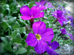 Spring Flower 2012 - 20