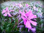 Spring Flower 2012 - 21