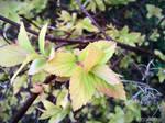 Spring Flower 2012 - 25