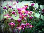 Spring Flower 2012 - 28