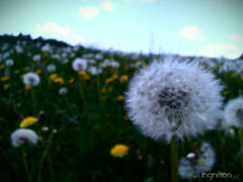 Spring Flower 2012 - 34 by Ingnition