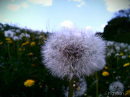 Spring Flower 2012 - 35 by Ingnition