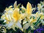 Spring Flower 2012 - 46
