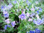 Spring Flower 2012 - 47