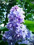 Spring Flower 2012 - 48