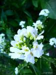 Spring Flower 2012 - 54