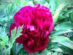 Spring Flower 2012 - 55