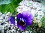 Spring Flower 2012 - 56