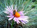 Spring Flower + Bee 2012 - 60