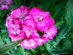 Spring Flower 2012 - 63