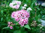 Spring Flower 2012 - 64