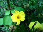 Spring Flower 2012 - 65