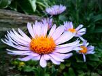 Spring Flower 2012 - 66