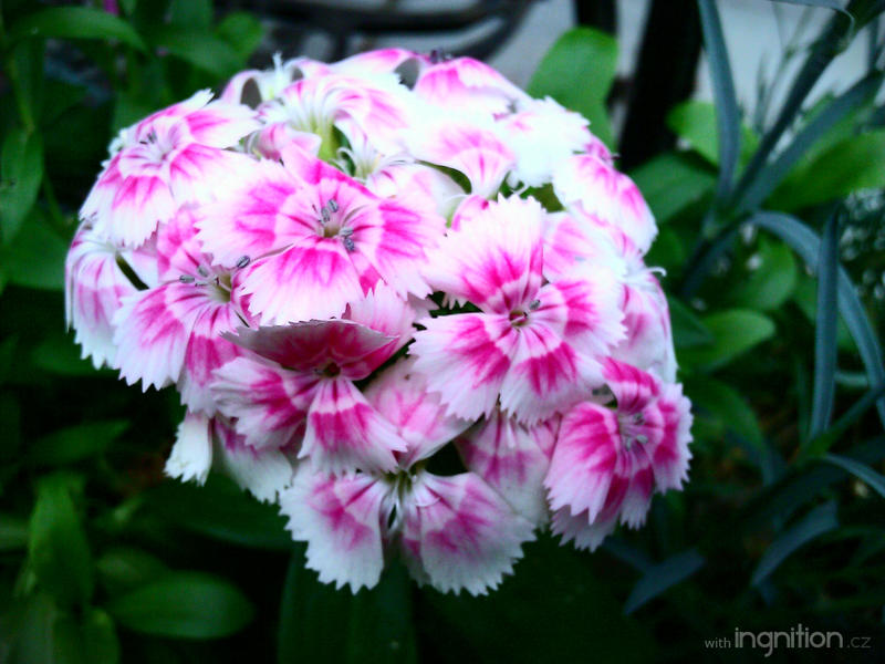 Spring Flower 2012 - 70 by Ingnition