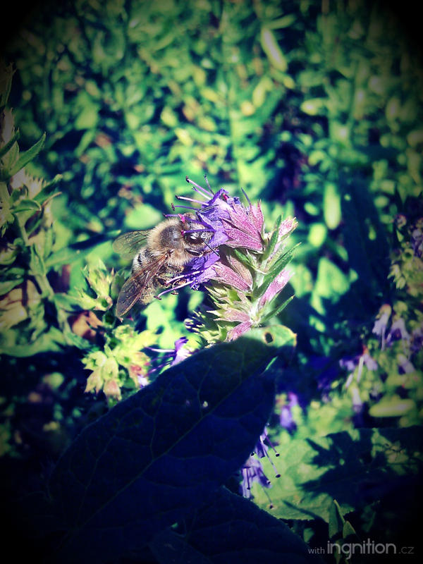 Summer Flower + Bee 2012 - 5 by Ingnition
