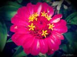 Summer Flower 2012 - 13