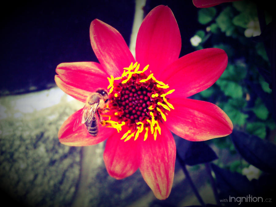 Summer Flower + Bee 2012 - 15 by Ingnition